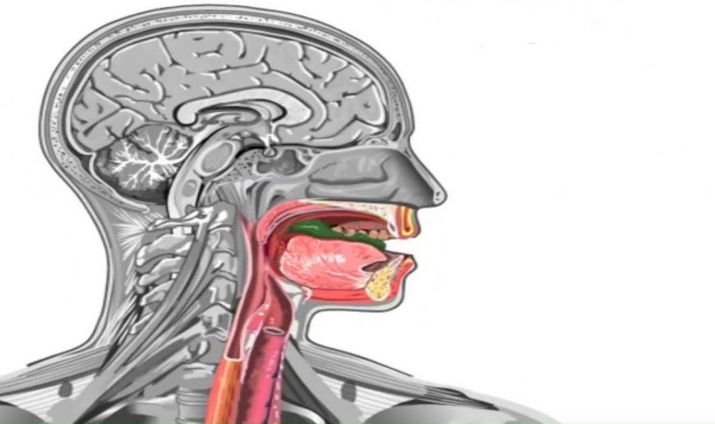 مراکز بلع در مغز